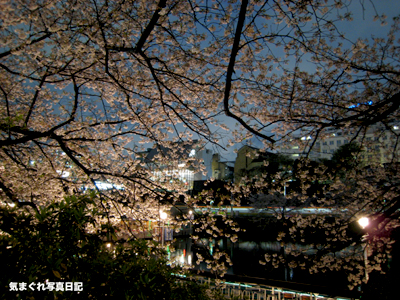 20070404yozakura_1515m.jpg