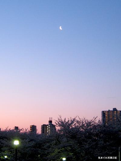 20080402_sakura6215m.jpg