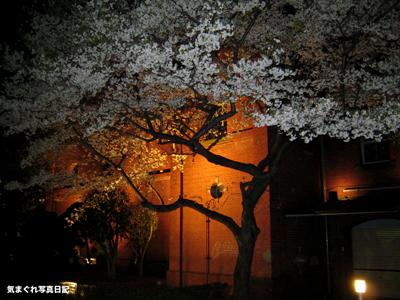 20070328yozakura_1112m.jpg