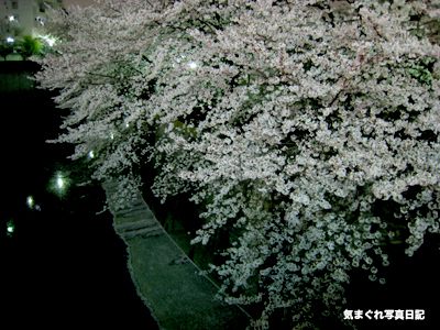 20070402yozakura_1485.jpg
