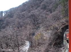 20080405taruT1tm.jpg